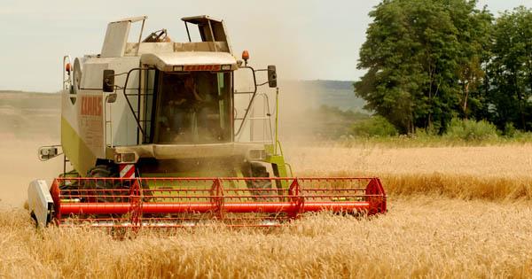Agrar Mantler, Weizen; Landwirtschaft; biologisch; Gedersdorf;