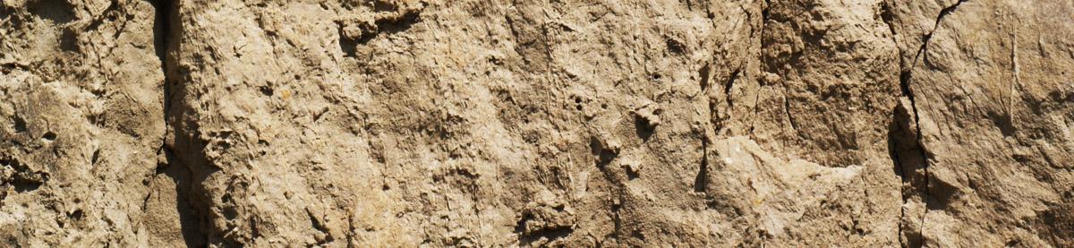 Löss; soil; boden; mantlerhof; Weingut; Veltliner; Trockenrasen; bio; organic;