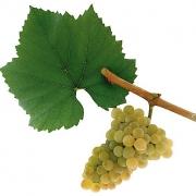 Chardonnay; Österreich; Mantlerhof; Weingut; Bio